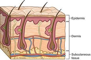 three-skin-layers