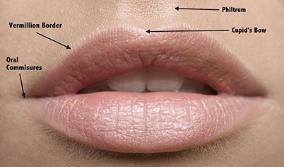 lips-labelled